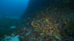 Underwater footage coralline fishes corsica corse mediterranean Stock Footage