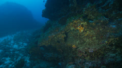 Underwater footage melon sea urchin coralline corsica corse mediterranean Stock Footage