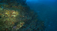 Underwater footage melon sea urchin coralline corsica corse mediterranean - stock footage
