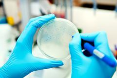 hands in gloves counting phages at agar plate - stock photo