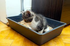 Cat dispose in litter box Stock Photos