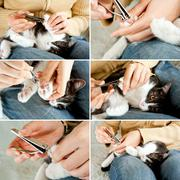 Trimming cat nails - stock photo