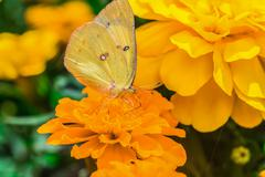 a beautiful butterfly on a flower - stock photo