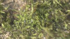 Moss On Ground Close Up Stock Footage