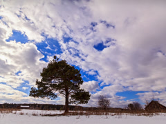 Pine on a background of clouds. Time Lapse. 4x3 Stock Footage