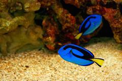 Beautiful blue fish Stock Photos