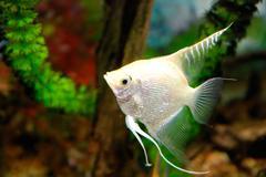 tropic fish - stock photo