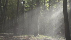 Slow Motion Of Heavy Rain In Forest In Misty Light Stock Footage