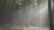 Stock Video Footage of Slow Motion Of Heavy Rain In Forest In Misty Light