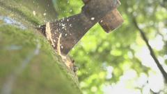 Ax Ramming Into A Tree In Extreme Slow Motion Stock Footage