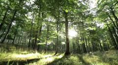 Sun shining through trees in a beautyful forest and on grass - stock footage