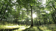 Stock Video Footage of Sun shining through trees in a beautyful forest and on grass