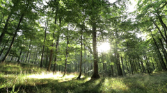 Beautiful and romantic forest with sun shining through Stock Footage