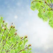 Stock Illustration of birch tree in garden