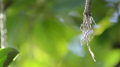 Broken piece of rope hanging on a green unfocused background Stock Footage