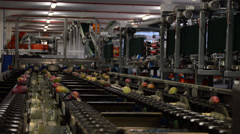 Mangoes fruit in a chain industrial Stock Footage