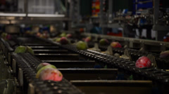 Mangoes fruit industrial chain Stock Footage