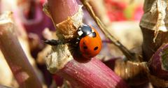 Detail of lady bug Stock Photos