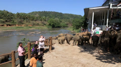 Elephants being led to river for washing Stock Footage