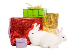Rabbits with gifts Stock Photos