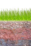 Cross section of green grass and underground soil layers beneath Stock Photos