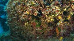 Underwater footage coralline corsica corse mediterranean Stock Footage