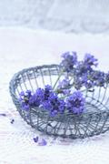 Twigs of lavender (Lavendula angustifolia) in wire basket Stock Photos