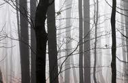 Stock Photo of Germany, Hesse, fog in the nature park Taunus