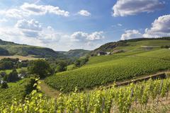 Germany, Rhineland-Palatinate, Vineyards at Nahe valley near Schlossboeckelheim Stock Photos