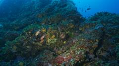 Underwater footage spirographe coralline corsica corse mediterranean Stock Footage
