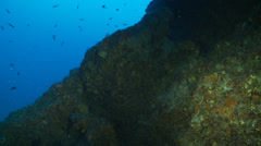 Underwater footage coralline anthias corsica corse mediterranean Stock Footage