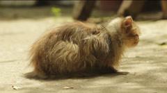 Two cute Kitties Stock Footage