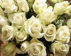 Bunch of greenish white roses, background Stock Photos