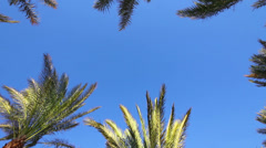 Background with blue sky and palm leaves Stock Footage