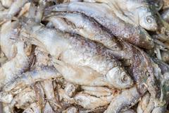 fermented fish - stock photo