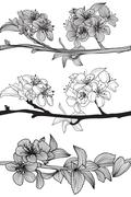 Set of hand drawn decorative cherry blossoms, design elements Stock Illustration