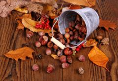 zinc bucket with distributed acorn, chestnut and rosehip - stock photo
