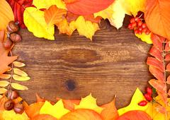 Stock Photo of red and yellow maple leaves on wood background