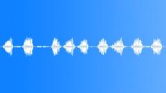 Birdsong. Goldfinches. Forest Village. - sound effect