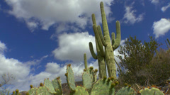 Bright Arizona Saguaro Landscape Time Lapse Stock Footage