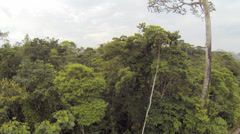 Tracking along the rainforest canopy in the Ecuadorian Amazon 2.7K Stock Footage