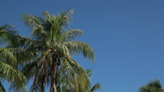 Palm trees wave in wind on tropical island, isle of pines, new caledonia Stock Footage