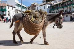 Donkey carrying a sunflower in chinchon near madrid Stock Photos
