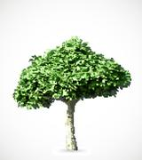 Stock Illustration of Green halftone tree. Vector
