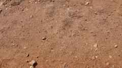 Stock Video Footage of Ants Walking Over Sandy Desert Overhead Shot