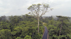 A large emergent tree hung with Oropendola nests above the forest canopy Stock Footage