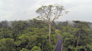 Stock Video Footage of A large emergent tree hung with Oropendola nests above the forest canopy