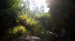 Ambient wilderness scene at small river Stock Footage