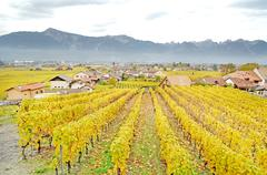 Fields in Swiss location - stock photo