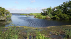 Marsh and water landscape - stock footage